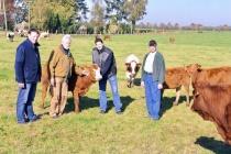 Qualitäts-Rindfleisch aus kleinbäuerlicher Haltung